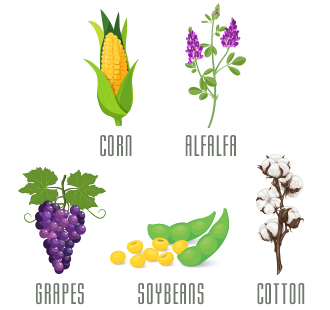 The most common crops paraquat is used on.